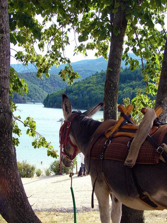 "Lac de Villefort vu par ""Modestine""..."