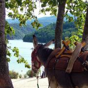 Lac de Villefort vu par